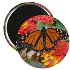"Monarch Butterfly 2.25"" Magnet (10 pack)"