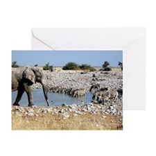Elephant & Zebras Greeting Cards (Pk of 20)