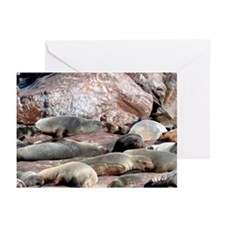 Cape Fur Seals Greeting Cards (Pk of 20)