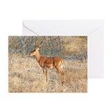 Impala Greeting Cards (Pk of 20)