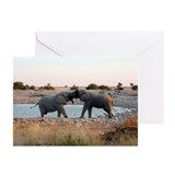 Big Kiss Greeting Cards (Pk of 20)