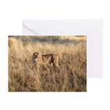 Cheetah Greeting Cards (Pk of 20)