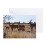 Kudu Family Greeting Cards (Pk of 20)