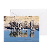 Zebras at Water Hole Greeting Cards (Pk of 10)