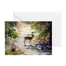 Damara Dik-Dik Greeting Cards (Pk of 20)