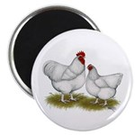 Orpington White Chickens Magnet