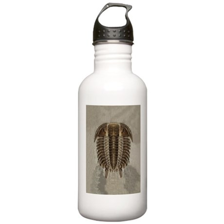 Trilobite Fossil Stainless Water Bottle 1.0L