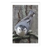 White-breasted Nuthatch Postcards (Package of 8)