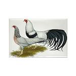 Yokohama Duckwing Chickens Rectangle Magnet (10 pa