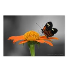 Butterfly Kiss Postcards (Package of 8)