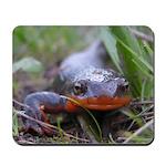 Salamander California Newt Face Mousepad