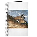 Cape Cod Beachcombers (1) Journal