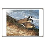 Cape Cod Beachcombers (1) Banner