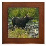 Moose framed tiles Framed Tiles
