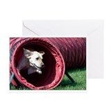 Agility Lab Greeting Cards
