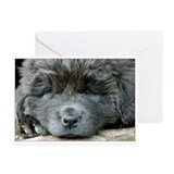 Newfoundland Puppy Greeting Cards