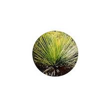 Australian Grass Tree Mini Button