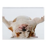 Bulldog Wall Calendar &amp;quot;B&amp;quot;