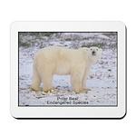 Polar Bear Photo Mousepad