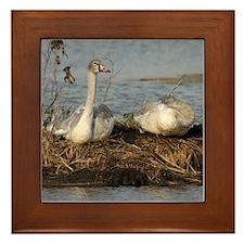 Young Swans, Framed Tile