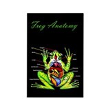 Frog Anatomy Rectangle Magnet (10 pack)