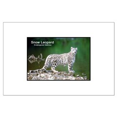 Snow Leopard Photo Posters