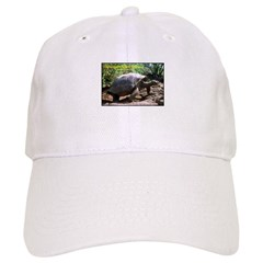 Galapagos Giant Tortoise Photo Cap
