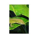 Green Anole on Leaf Vertical Magnets (100)