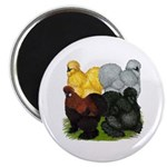 """Silkie Assortment 2.25"""" Magnet (100 pack)"""