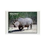 White Rhino Rhinoceros Photo Rectangle Magnet (10