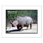 White Rhino Rhinoceros Photo Small Poster
