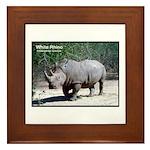 White Rhino Rhinoceros Photo Framed Tile