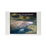 Florida Manatee Photo Rectangle Magnet (10 pack)