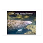 Florida Manatee Photo Postcards (Package of 8)