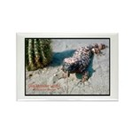 Gila Monster Lizard Photo Rectangle Magnet (10 pac