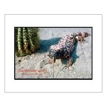 Gila Monster Lizard Photo Small Poster