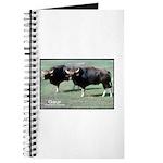 Gaur Bulls Photo Journal