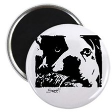 "SWEET BOSTON TERRIER 2.25"" Magnet (100 pack)"