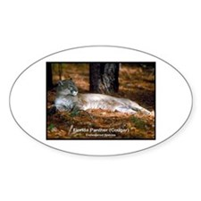 Florida Panther Cougar Photo Oval Decal