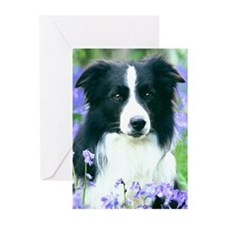 Border Collie in Bluebells Cards Pack=6