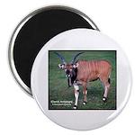 Eland Antelope Photo Magnet