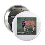 Eland Antelope Photo Button