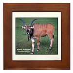 Eland Antelope Photo Framed Tile