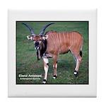 Eland Antelope Photo Tile Coaster