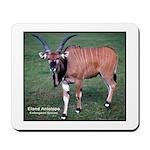 Eland Antelope Photo Mousepad