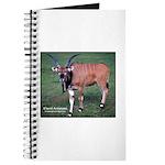 Eland Antelope Photo Journal