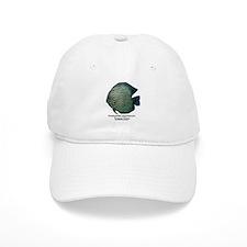 Symphysodon aequifasciata (Di Baseball Cap