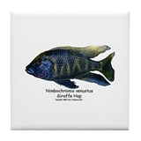 Nimbochromis venustus (Giraff Tile Coaster