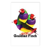 Gouldian Finch Postcards (Package of 8)