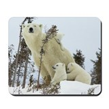 MAMA POLAR BEAR Mousepad